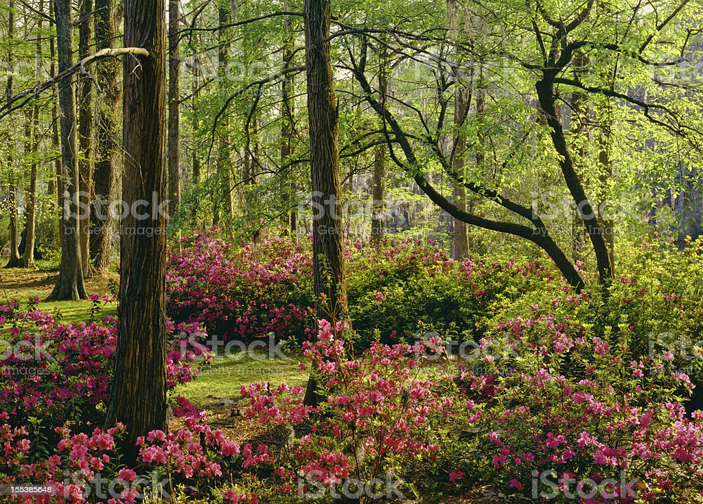 Southern Woodland Garden royalty-free stock photo