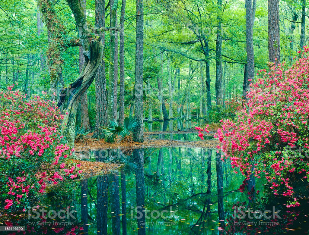 Southern Woodland Garden royalty-free stock photo