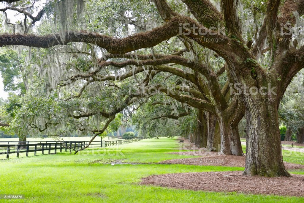 Southern woodlands stock photo