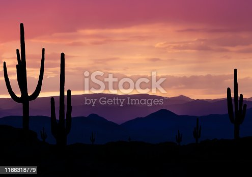 Desert with Saguaro Cactus at sunset near Phoenix Arizona