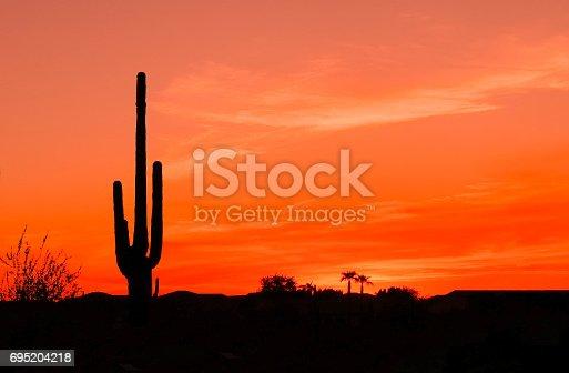 Bright Orange Desert Sunset with Saguaro Cactus in Silhouette