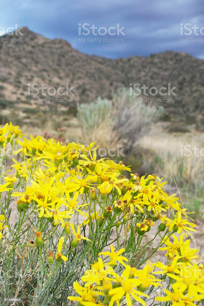 southwest wildflower desert mountain landscape and storm clouds royalty-free stock photo