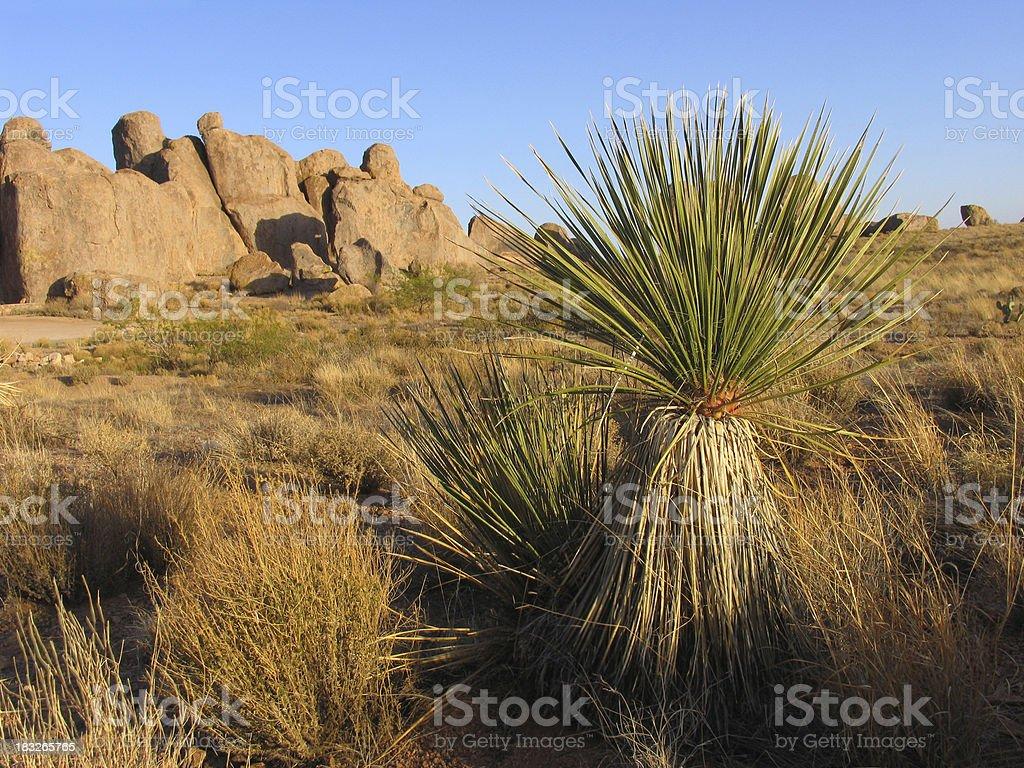 Southwestern Scene royalty-free stock photo