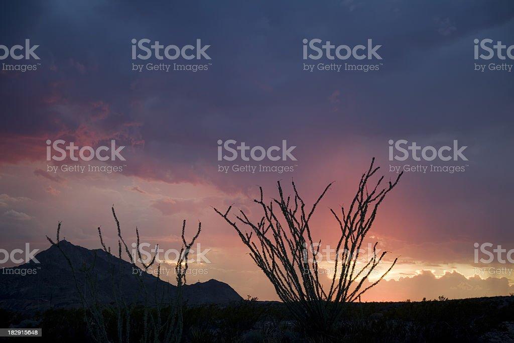 Southwestern Sunset with Ocotillo Cactus stock photo