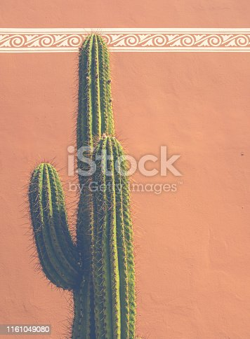 Detail Of A Cactus Against An Adobe Style Clay Building In Tucson In The Southwestern USA With Copy Space