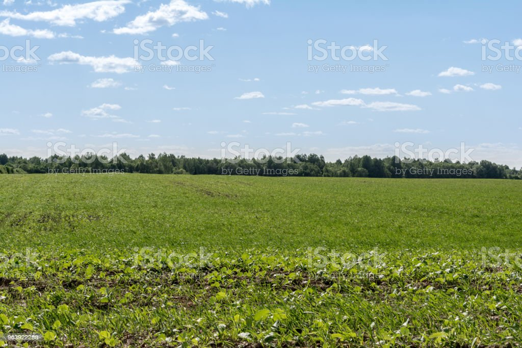 sowed green field, forest on the horizon and blue sky with small clouds - Royalty-free Agricultural Field Stock Photo