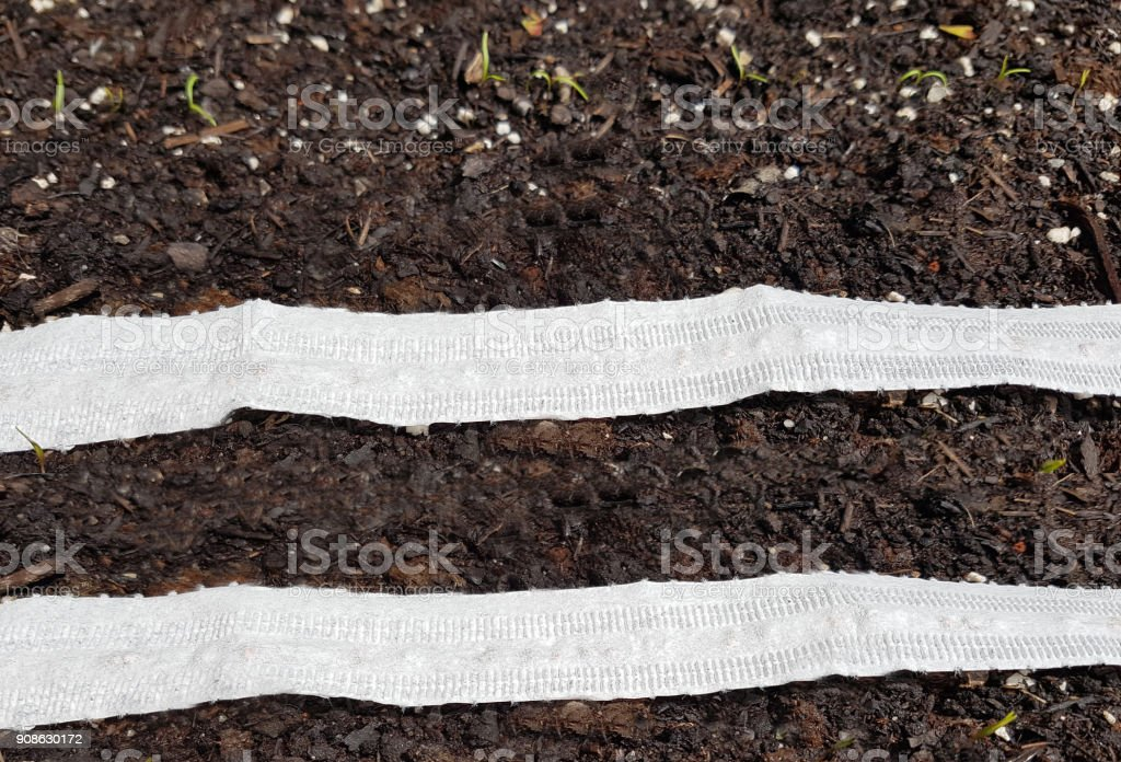 sowing, germination stock photo