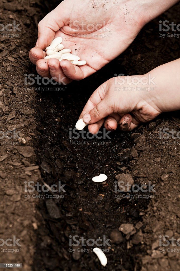 Sowing royalty-free stock photo
