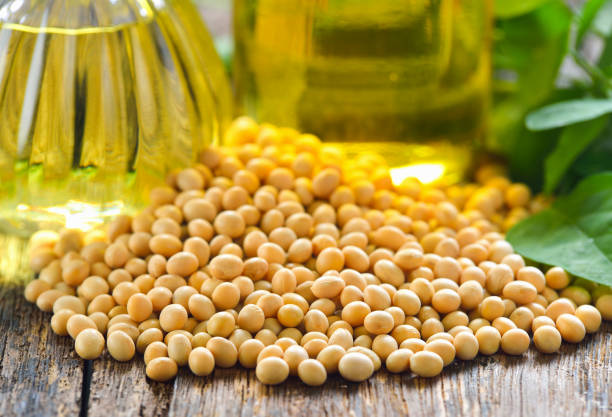 soy beans and oil stock photo
