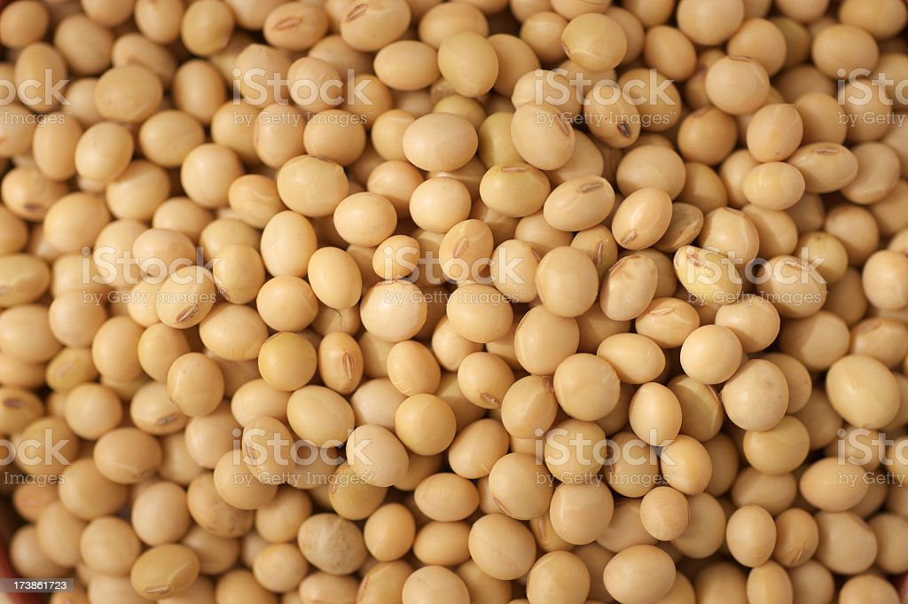 Soy beans royalty-free stock photo