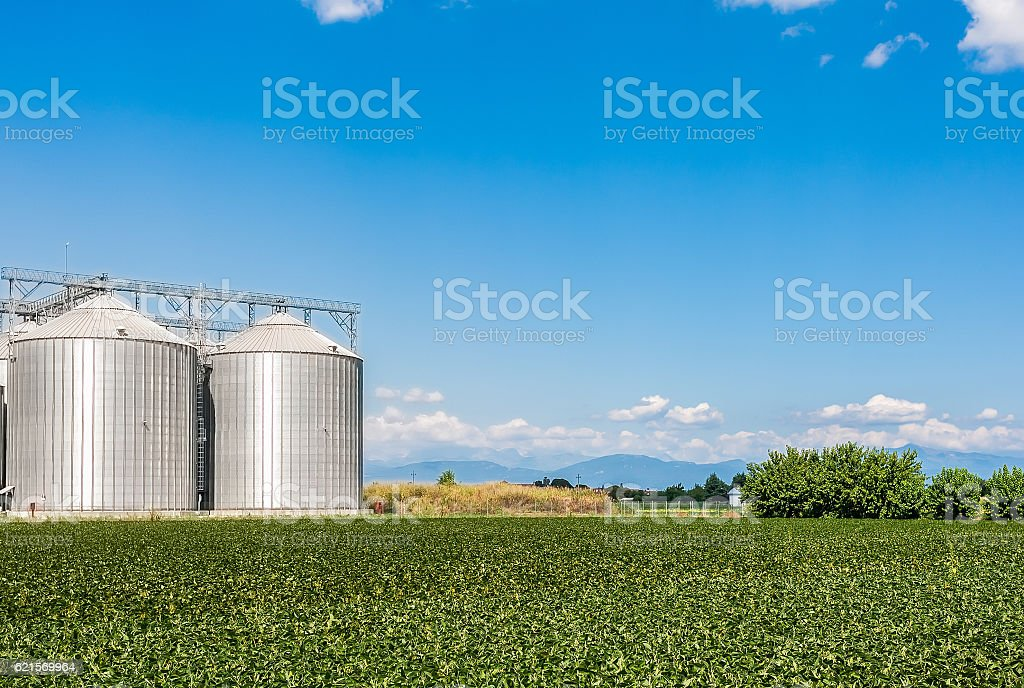 Soy field and agricultural silos photo libre de droits
