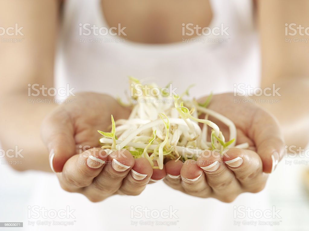soy sprouts royalty-free stock photo