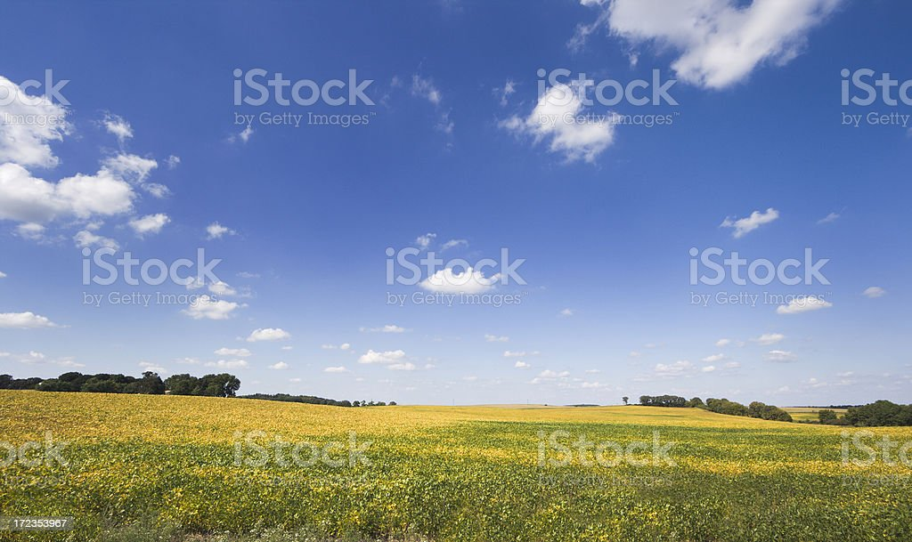 Soybean Autumn royalty-free stock photo