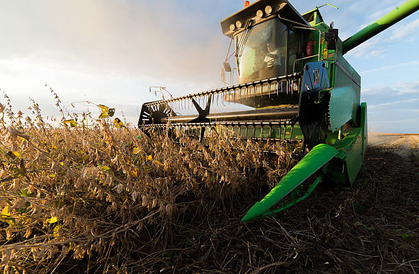 soybean harvest in autumn Harvesting of soybean field with combine agricultural machinery stock pictures, royalty-free photos & images