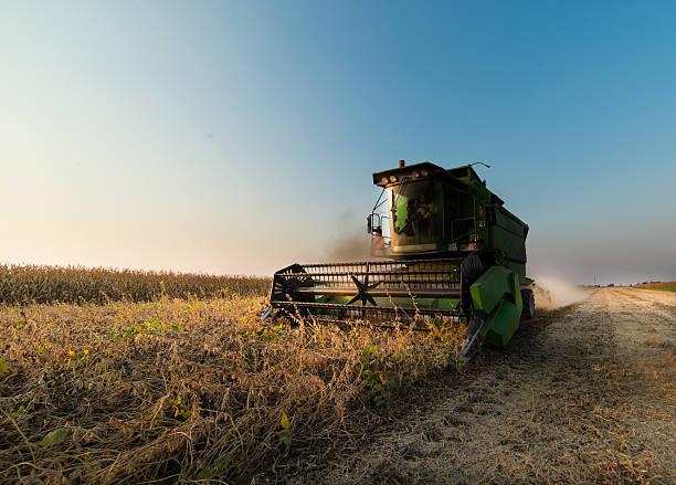 Sojabohne harvest im Herbst – Foto