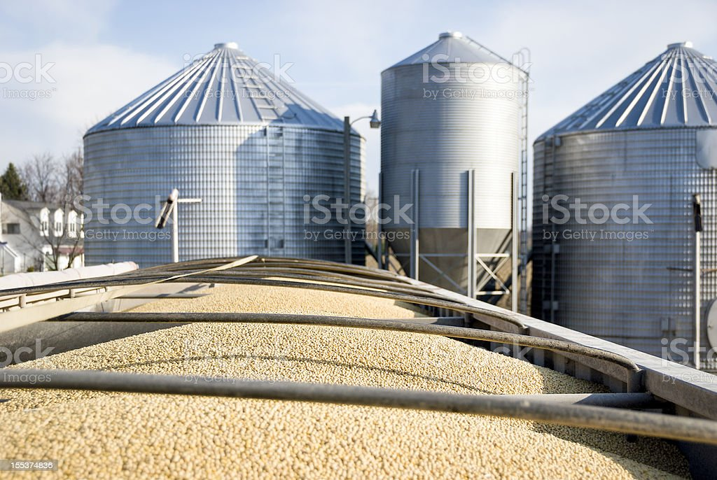 Soybean Transport stock photo