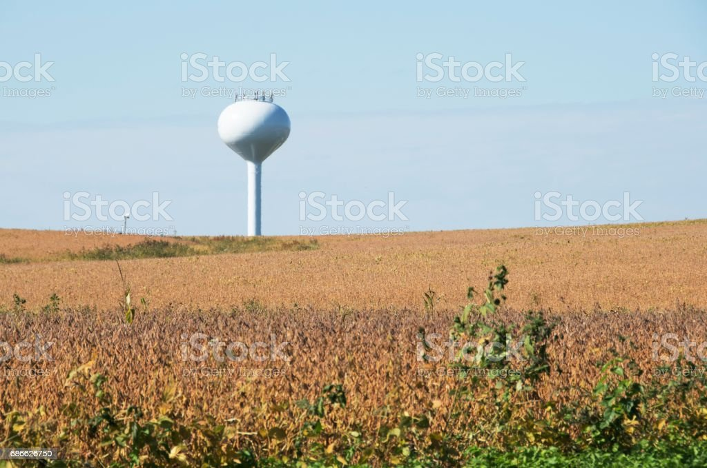 Soybeans and Water Tower royalty-free stock photo