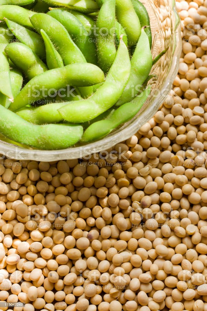 Soybeans stock photo