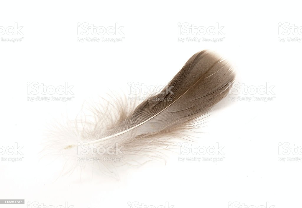 Spa feather royalty-free stock photo