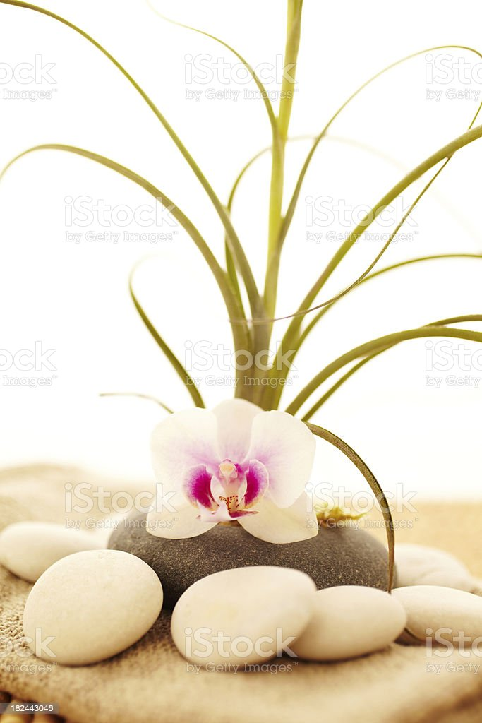 Spa Still life of air plant with orchid and stones royalty-free stock photo