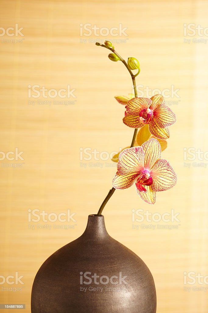 Spa still life of orchid flower in vase royalty-free stock photo