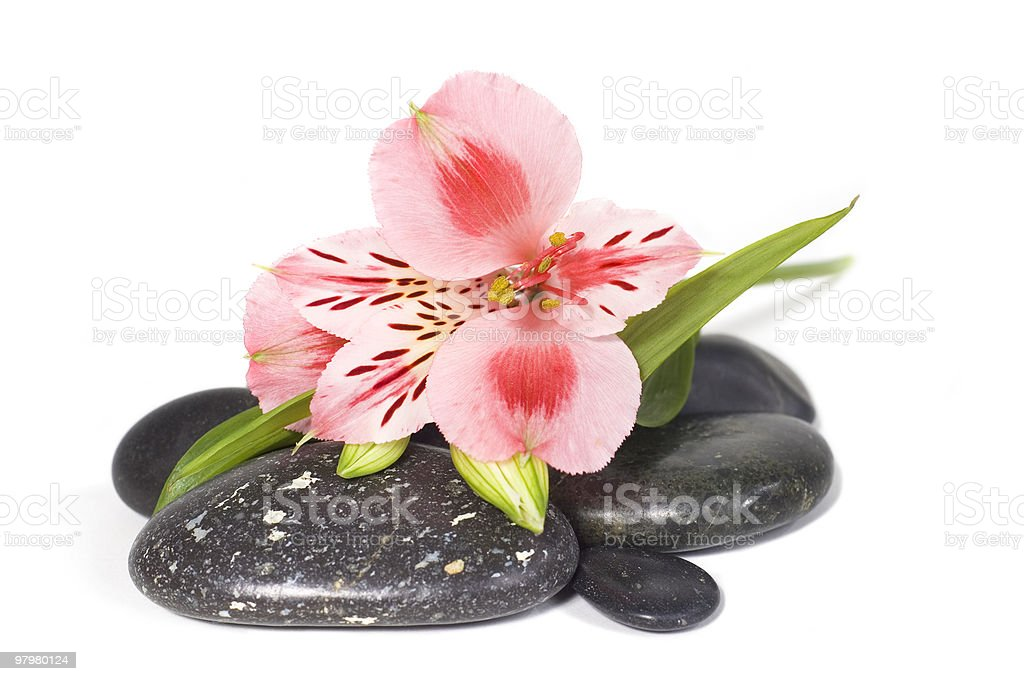 Spa still life with wild pink orchid royalty-free stock photo