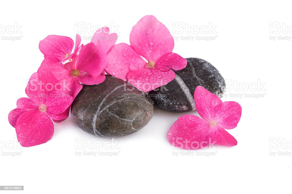 Spa stones wet with pink flowers royalty-free stock photo