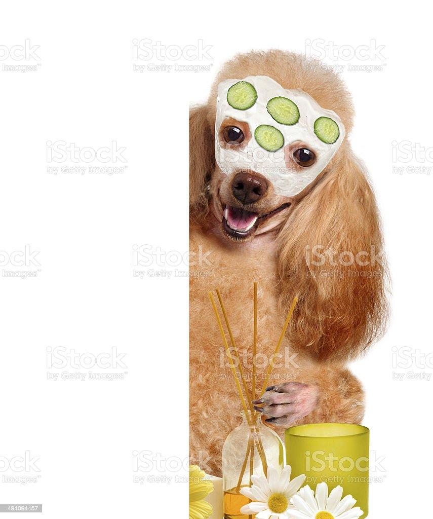 Spa wash dog. - Royalty-free Alternative Therapy Stock Photo