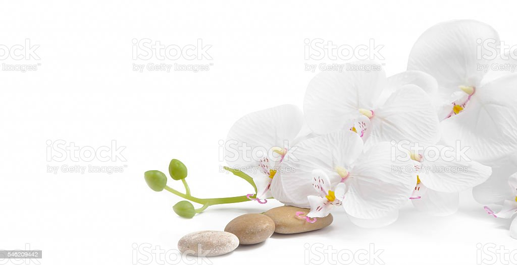 Spa white orchid with massage stones stock photo