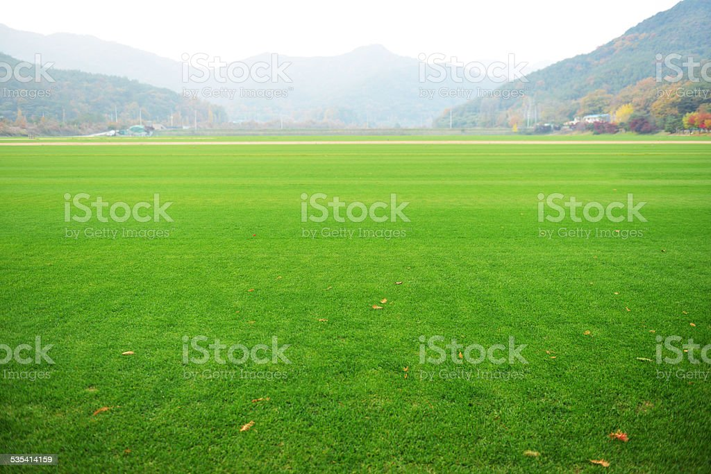 Spacious Green grass field stock photo