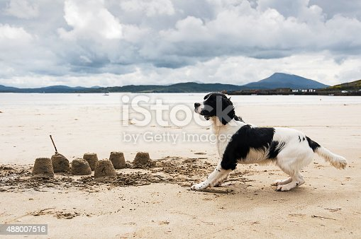 Spaniel dog playing on Donegal, Ireland beach