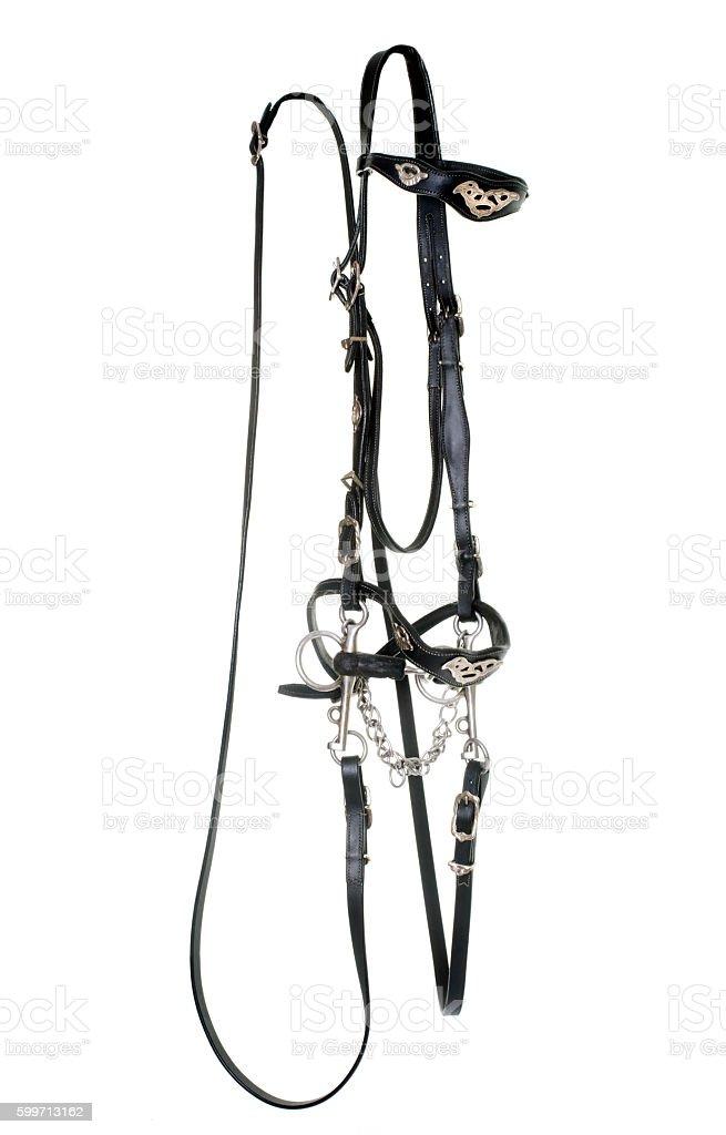 spanish bridle for horse stock photo