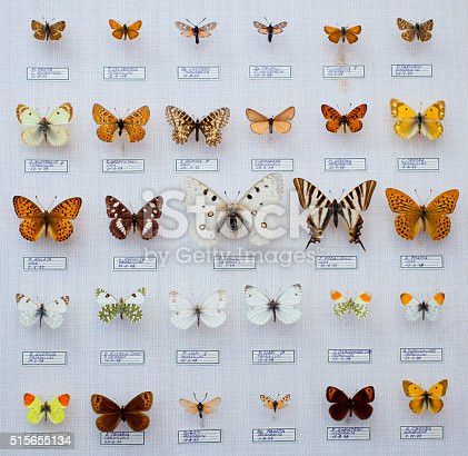 Spanish buttefly collection, entomological collection in awesome preservation status.