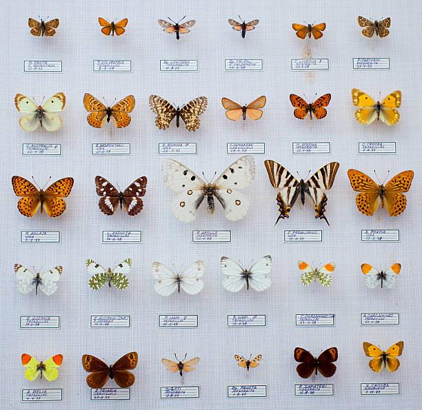 Spanish butterflies collection picture id515655134?b=1&k=6&m=515655134&s=612x612&w=0&h=tbxxjo8bin9e2jsymhkcrellans4fp0hfktds2yrq4i=