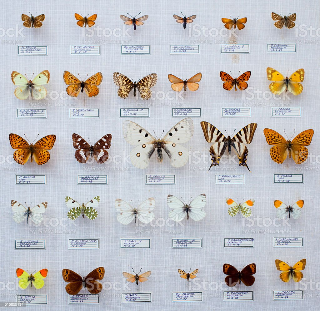 Spanish butterflies collection stock photo