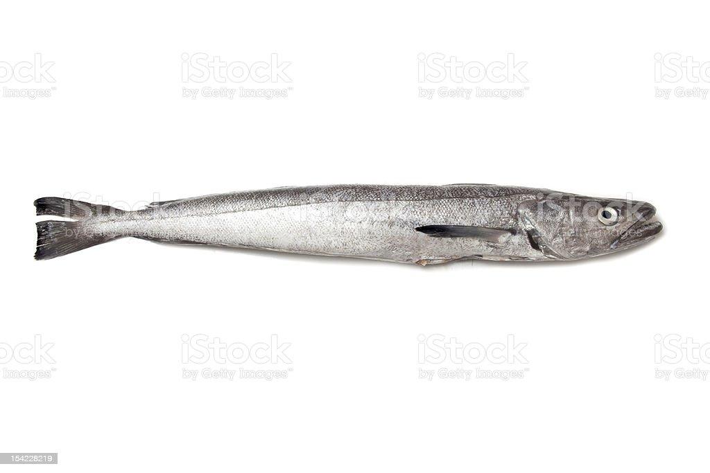 Spanish Hake fish. stock photo