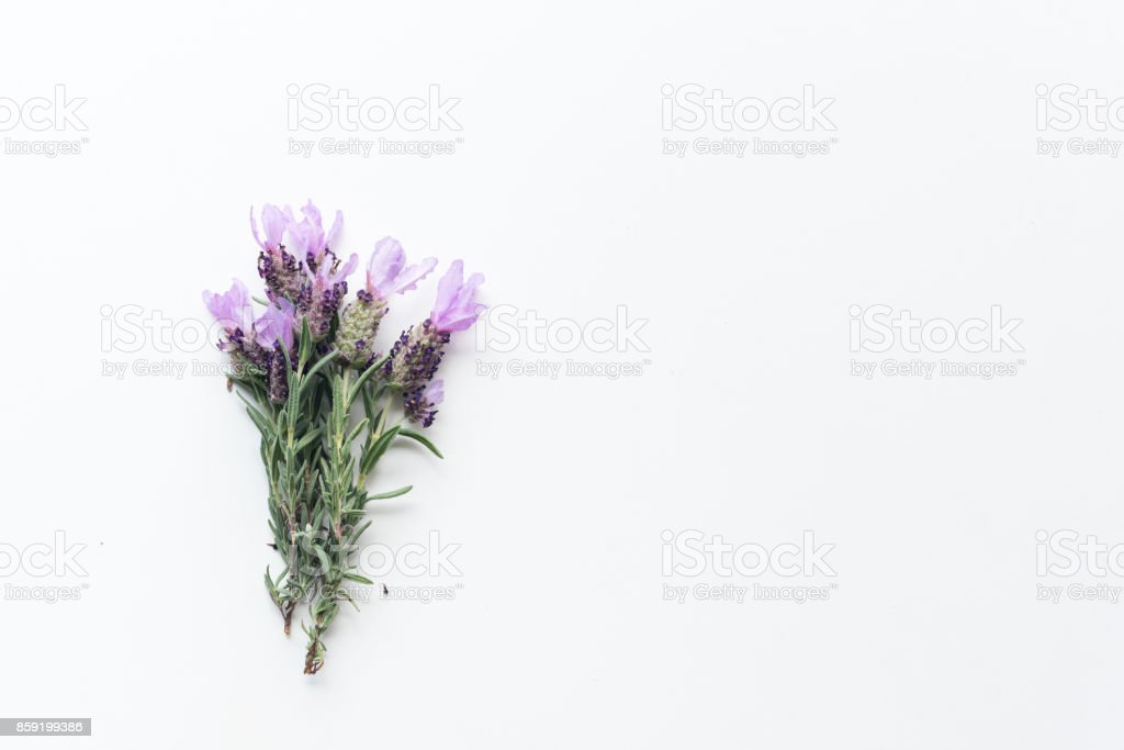 Spanish lavender from above stock photo