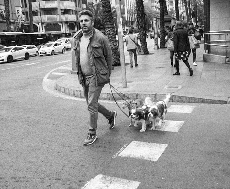 Spanish Man Walking Dogs in City Outdoors Spring