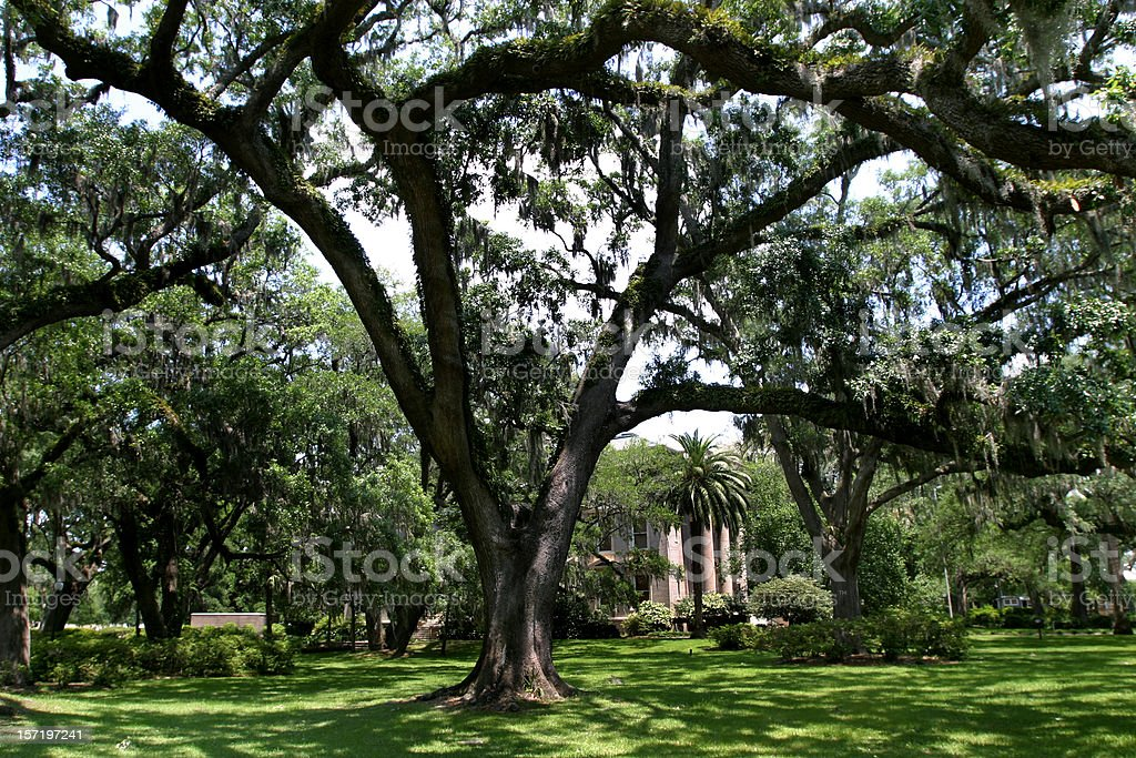 Spanish Moss on Live Oaks, Southern Mansion royalty-free stock photo