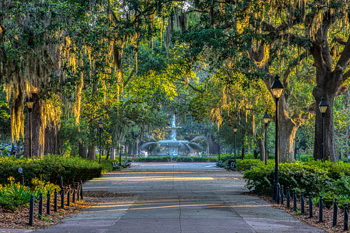 Sunrise on Spanish Moss in Savannah, Georgia