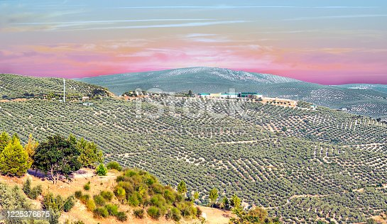 1135138312 istock photo Spanish olive trees 1225376675