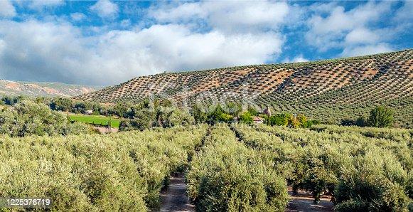 1135138312 istock photo Spanish olive trees 1225376719