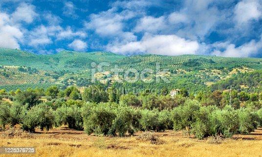 1135138312 istock photo Spanish olive trees 1225376725