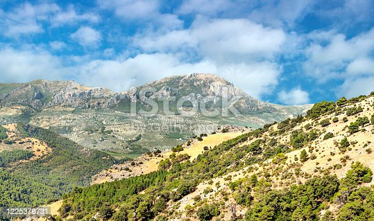 1135138312 istock photo Spanish olive trees 1225376731