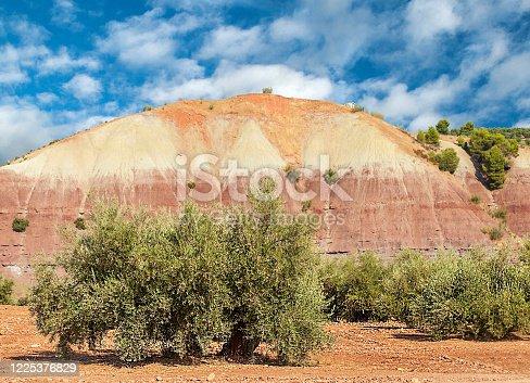 1135138312 istock photo Spanish olive trees 1225376829
