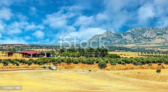 1135138312 istock photo Spanish olive trees 1225377492