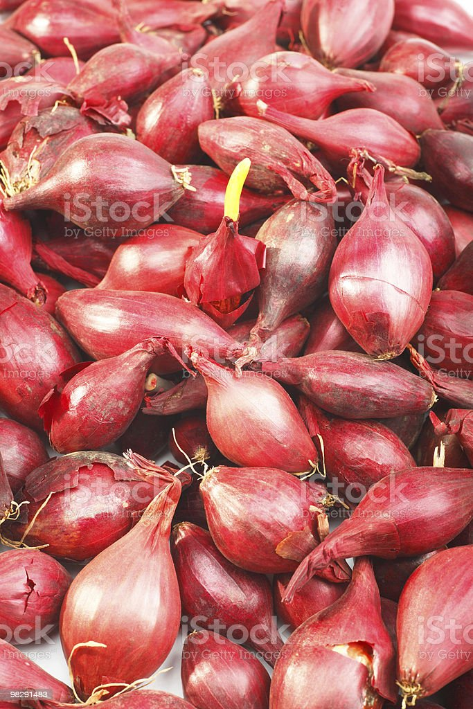 Spanish Onion set royalty-free stock photo