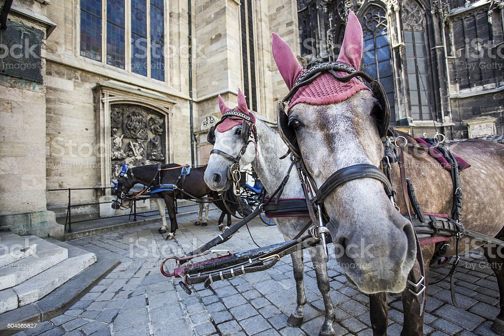 Spanish Riding School, Vienna Horses waiting to whisk tourists around the beautiful city of Vienna. Spanish Riding School built in 1735 as an extension to the Hofburg Palace complex (13th Century). Animal Stock Photo
