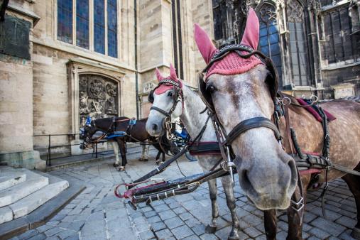 Spanish Riding School Vienna Stock Photo - Download Image Now