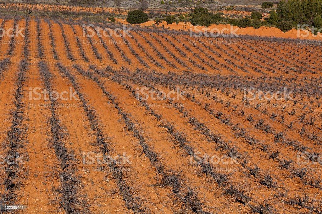 Spanish Vineyard royalty-free stock photo
